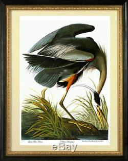 Audubon Great Blue Heron 30x44 Audubon Fine Art Print Hand Numbered Edition