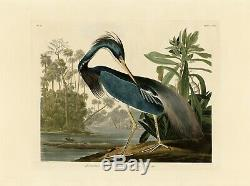 No. 217 Louisiana Heron Audubon Print Repro Havell Edition Double Elephant Folio