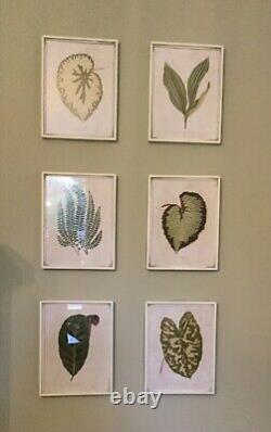 OKA Set of Exotic Leaf Framed Prints