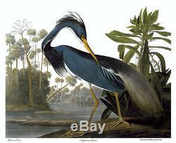 Audubon Louisiana Heron 30x44 Edition Numérotée À La Main