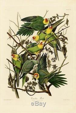 N ° 26 Carolina Parrot Audubon Imprimer Repro Housse Double Elephant Edition Havell Edition