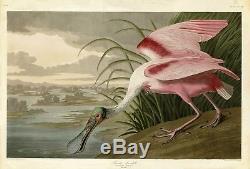 N ° 321 Spatule Roseate Audubon Print Folio Double Elephant Folio Édition Havell