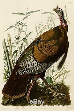 No. 1 Wild Turkey Imprimer Repro Havell Audubon Édition Double Elephant Folio