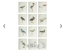 Oka Bird Prints Set Of 12