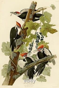 Pic Pileated No. 111 Audubon Imprimer Repro Havell Ed.