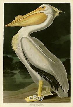 Plt311 Pélican Blanc Américain Audubon Repro Havell Edition Double Elephant Folio